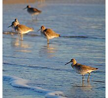 Willets Photographic Print