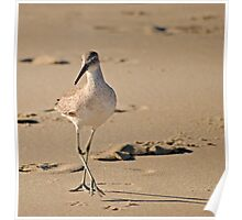 Dainty Willet Poster