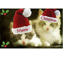 Meow Meow Christmas From Us!!! © Photographic Print
