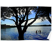 Tea Tree Silhouette  Poster