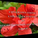 Banner for Rhododendrons group by Esperanza Gallego