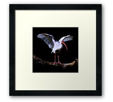 Bird On A Log ~ Part One Framed Print