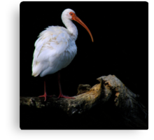 Bird On A Log ~ Part Two Canvas Print