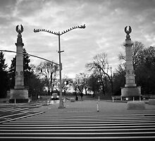 Brooklyn Grand Army Plaza: birds on a wire by Catherine White Photography