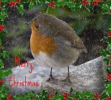 Robin - Merry Christmas by ColinBoylett