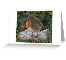 Robin - Merry Christmas Greeting Card