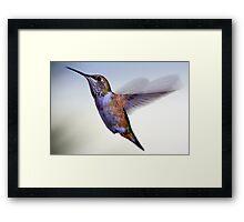 Female Rufous Hummingbird Framed Print
