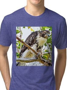 Red Tailed Hawk   Tri-blend T-Shirt