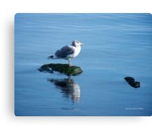 Jonathan - Seagull or A Relative Perhaps? Canvas Print