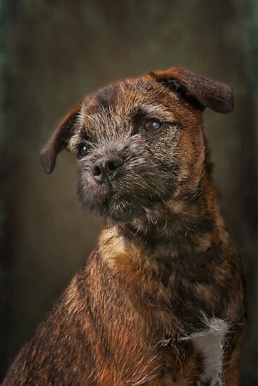 Sammy by Mark Cooper