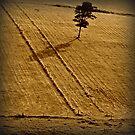 Jerrara Field by Masterclass