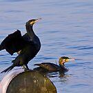 Cormorants by Vasil Popov