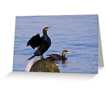 Cormorants Greeting Card