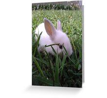 My new little bunny, Wilbur Greeting Card