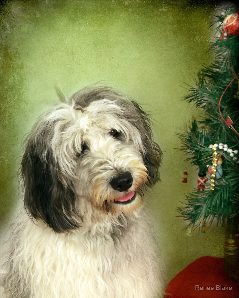 """"""" I Hope There Really Is A Santa Paws . . ."""" by Renee Blake"""