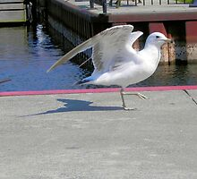 Showing Off and Strutting by Melissa Carlini