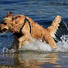 Doggone Fun by Noel Elliot