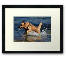 Doggone Fun Framed Print