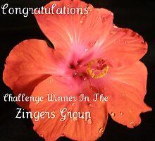 Zinger Challenge Banner by Rocksygal52