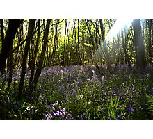 King's Wood Photographic Print