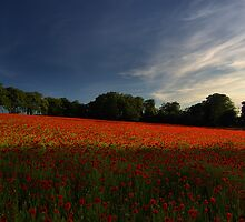 Endless Summer by Stuart Chapman