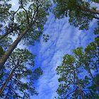 Tall Blue Sky by Kenneth Purdom