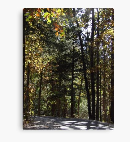 Trees on the Trails Canvas Print