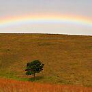 Alpha Tree Rainbow by Masterclass