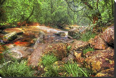 Golden Hole - Babinda QLD by Jennifer Craker