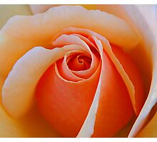 A Rose For My Friends Photographic Print