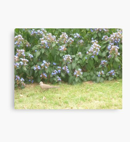 Dove walking into bushes Canvas Print