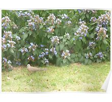 Dove walking into bushes Poster