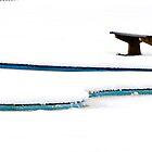 Blue Curves by Gary Finnigan