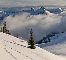 Snowshoe Paradise - Mt. Rainier N.P. by Mark Heller