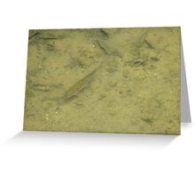 Golden fish swimming in shallow brook Greeting Card
