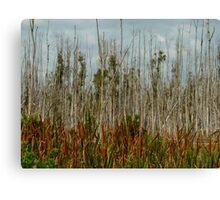 dry trees Canvas Print