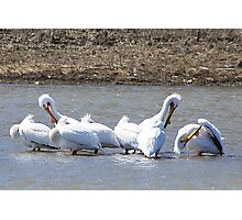 The Pelicans Are Back Photographic Print