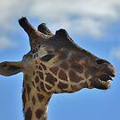 Hello Mr. Giraffe! by farmbrough