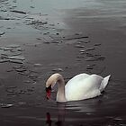 Swan Lake by Darren Burroughs