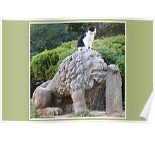 Cat on Cat Poster