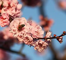 Bee Me Cherry by Emma Holmes