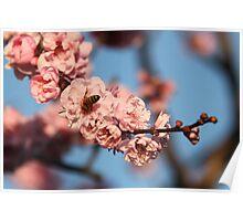 Bee Me Cherry Poster