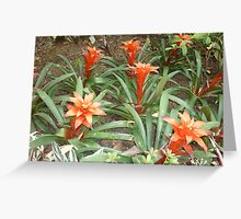 an ensemble of red trumpeting flowers Greeting Card