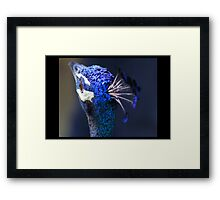 King Pea Blue Framed Print