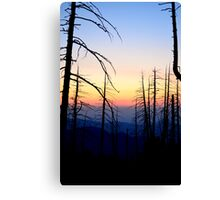 Snaggle Tooth Forest Canvas Print