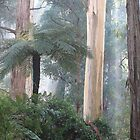 Misty Morning in the Bush. by Bette Devine
