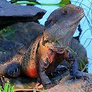 Botanic Dragon by Masterclass