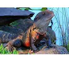 Botanic Dragon Photographic Print