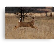 Grass Hopper - White-tailed Deer Canvas Print