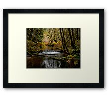 Whittaker Creek Framed Print
